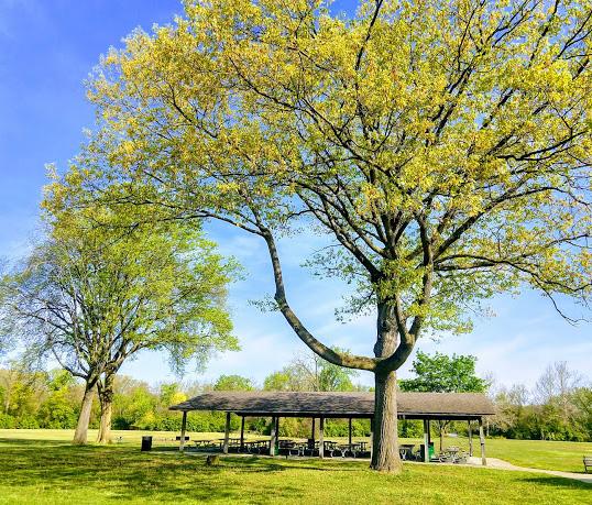 Nankins Mills Recreation Area Picnic Shelter